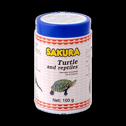 Sakura Turtle