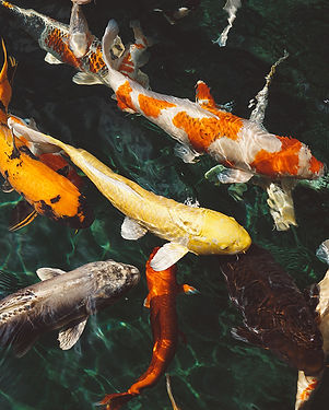 animals-fish-fishes-213399copy.jpg