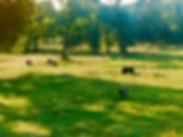 Black Dog Ranch, Weatherford, TX