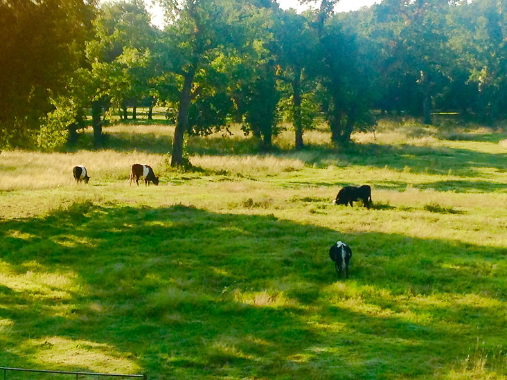 Black Dog Ranch, Weatherford, TX