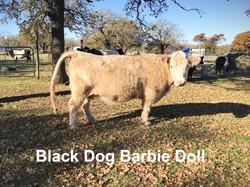 Black Dog Barbie