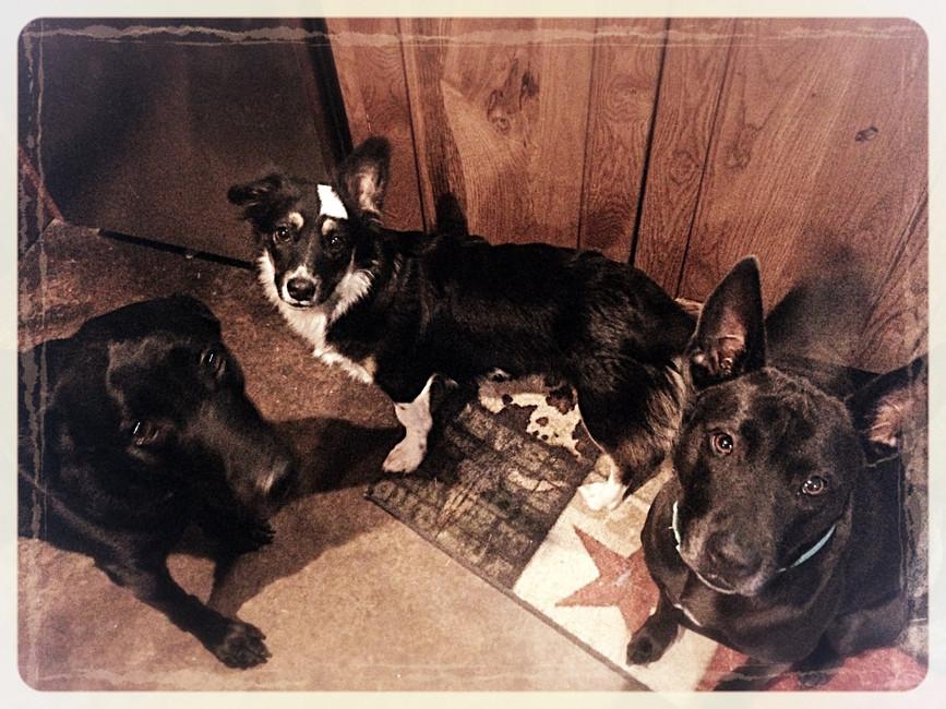 The black dogs of Black Dog