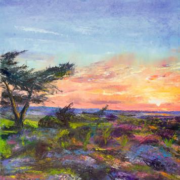 Sunset Heath