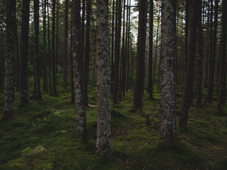 Increase Resilience Daily | Part 1: Biological Influences