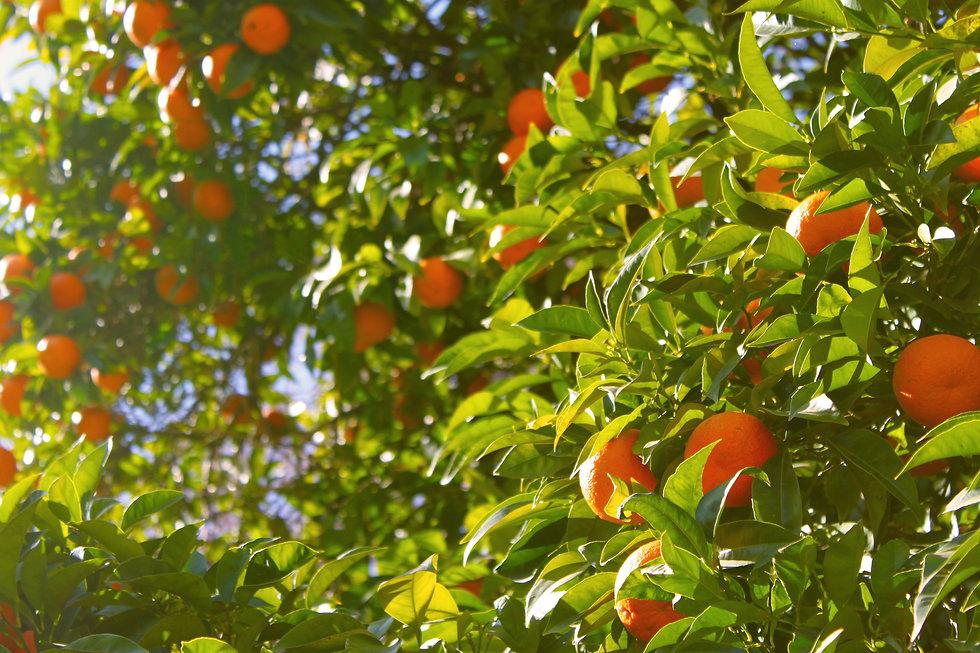 tree-branch-plant-farm-fruit-sunlight-10