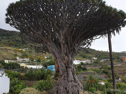 Actividades para realizar en Tenerife