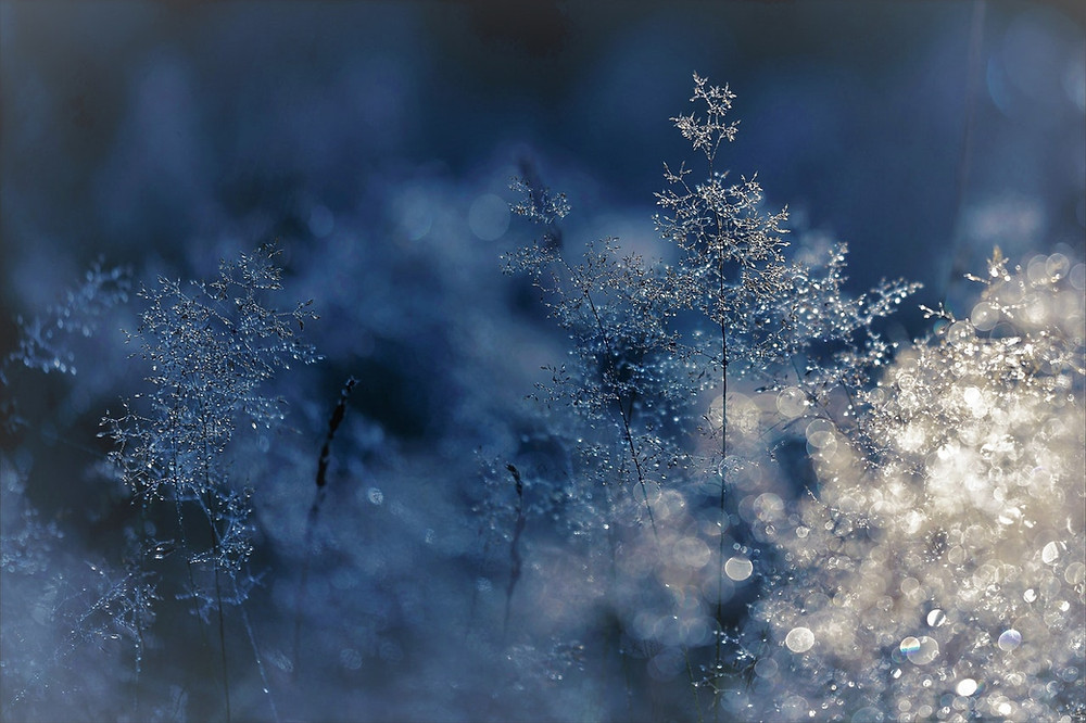 Blue Christmas in Lake Charles