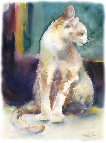 16 cat.jpg