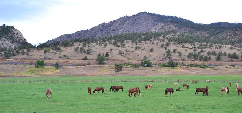 rsz_horses_in_pasture_5.jpg