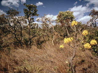 Company support to halt deforestation and conversion in the Cerrado gets a massive boost