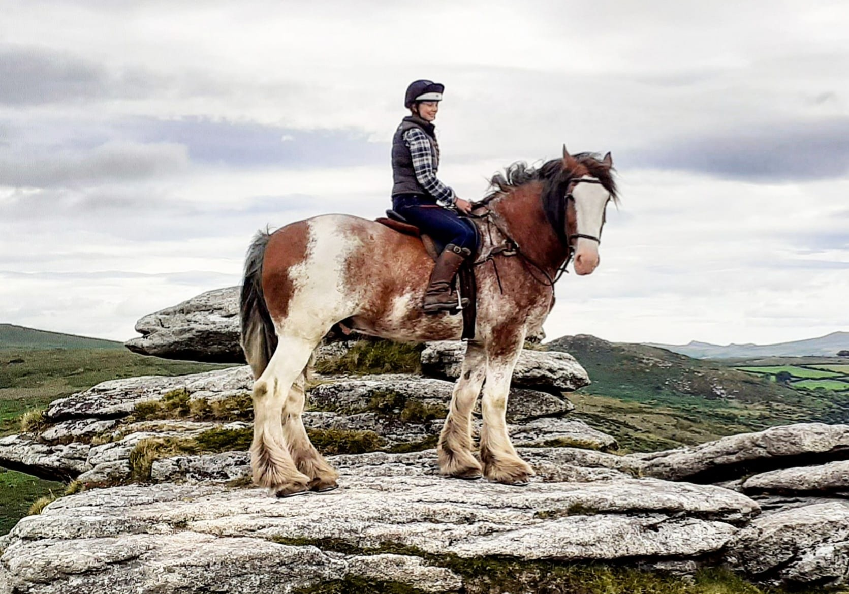 Big Al' (Adventure Clydesdale-Dartmoor)