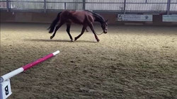 Assessing movement on the lunge