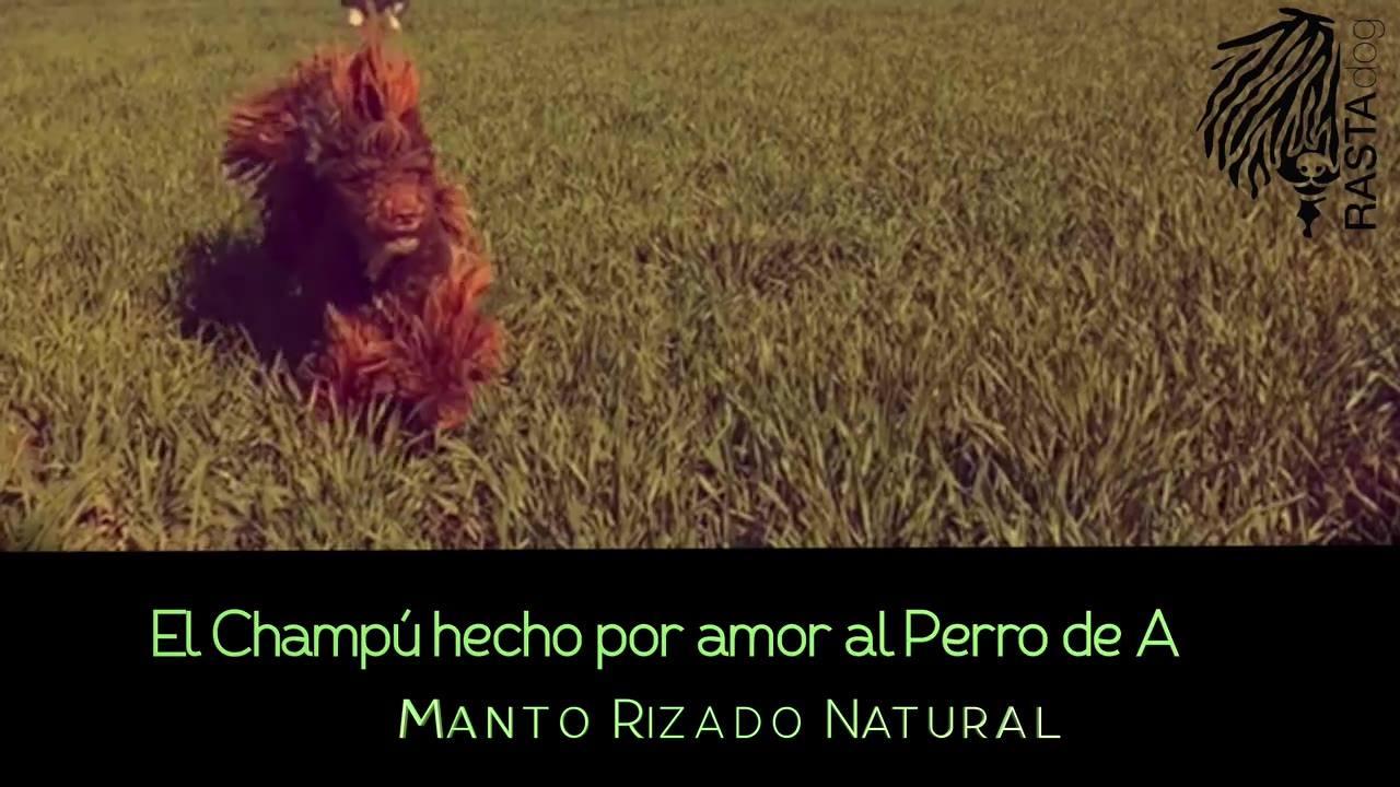 David Morales Coaching Canino