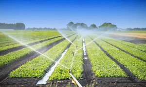 agriculture-waste-water-adobestock_86772