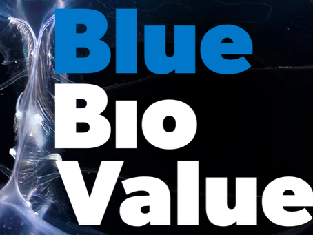Algaesys team joins the Blue Bio Value Accelerator Programme