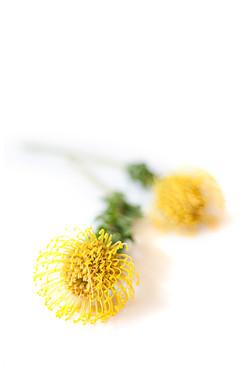 gele-tropische-bloem