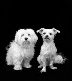 Timmy-en-Mel-IMG_8248-zwart-wit