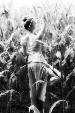 Dancer in the Cornfield