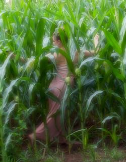Tess in cornfield