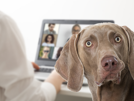 """""""Weim"""" I So Frustrated With My Sales Team?"""