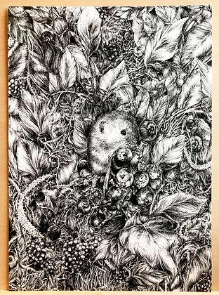 Harvest Mouse (Print)