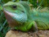 animal-close-up-colors-409811.jpg