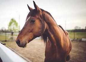 animal-brown-horse-6468_edited_edited.jp