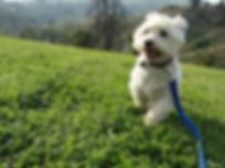 Vanessa Phoenix; her dog Dustin.