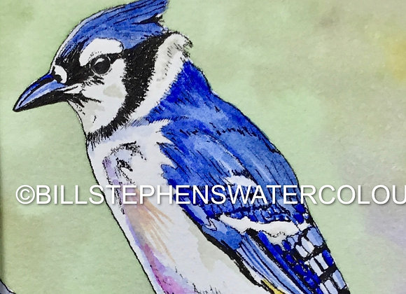 Original Watercolour Painting - Blue Jay