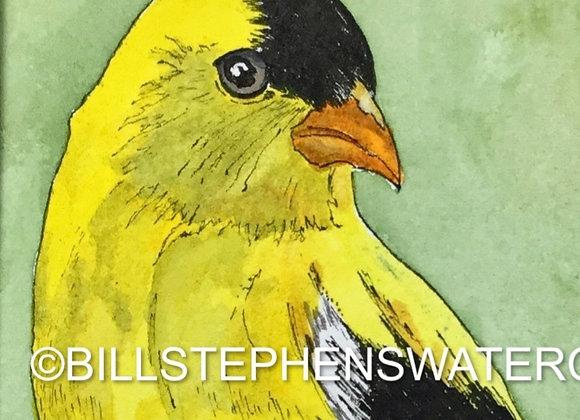 Original Watercolour Painting - Yellow Finch