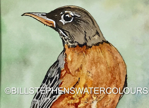 Original Watercolour Painting - Robin