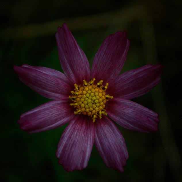 Blume im Gras