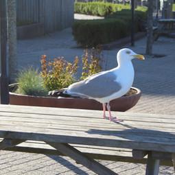 Center Parc Zanvoort - Holland