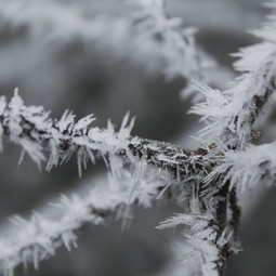 Frost am Ast