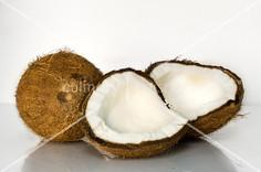 Coconuts - 3.jpg
