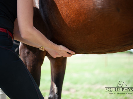 Equine: Abs of Steel