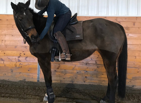 Caring for Our Senior Horses
