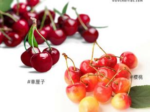 「櫻桃」和「車厘子」是一樣的東西嗎?讓專家正確解答!