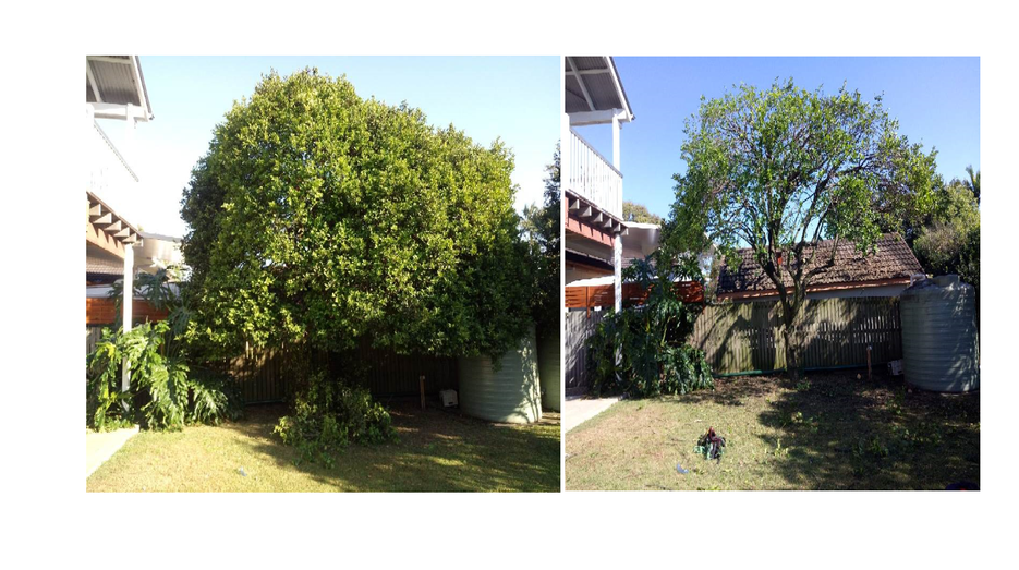Pruning before n after 1 .png