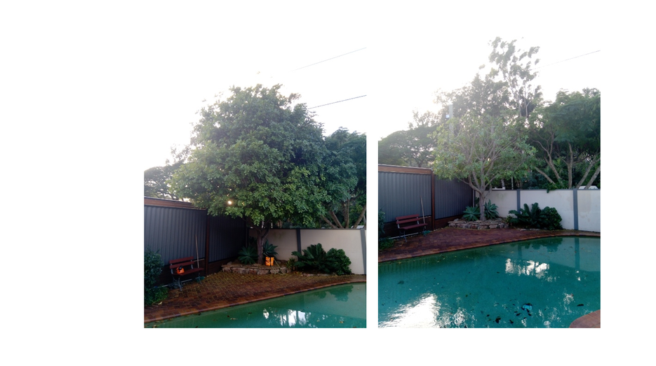 Prune before n after2 .png
