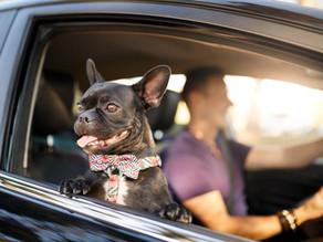 1 de cada 10 conductores lleva mal a su mascota