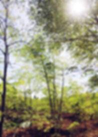 plantation-moringa