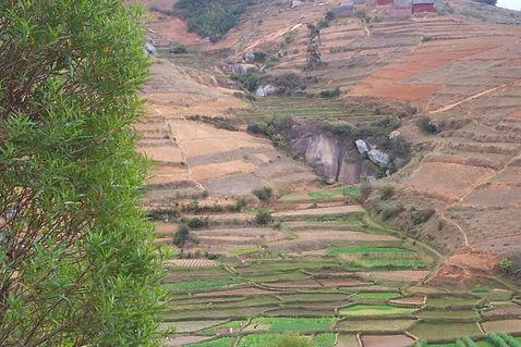 plantation de moringa à Madagascar