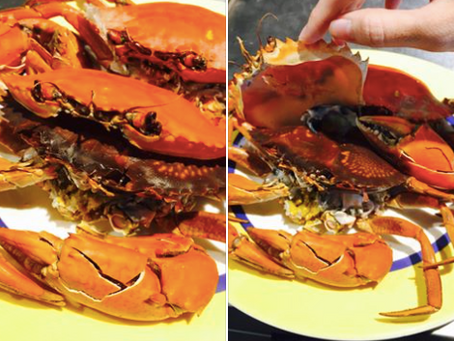 百分百的雙殼蟹