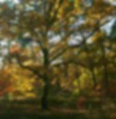 IMG_2209 - Version 2.jpg