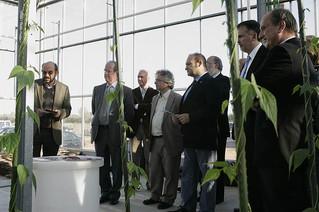 L'Agropolis de Viladecans acull un projecte per triar una col d'alt valor afegit