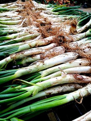 Arriba el Tast de Calçots de Gavà per donar protagonisme a un dels productes estrella del Parc Agrar