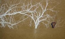 """Venetian Elephant pastel & acrylic on panel 30.5 x 49"""""""