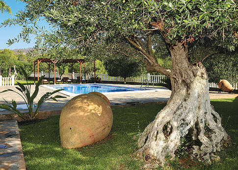 pool side amphora, nothing better than staying under a tree