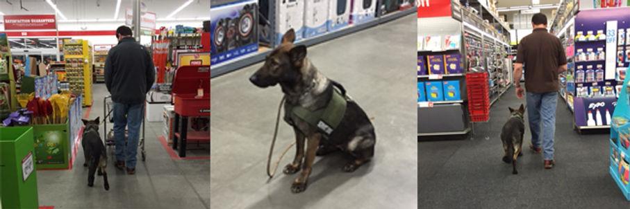 service dogs3.jpg
